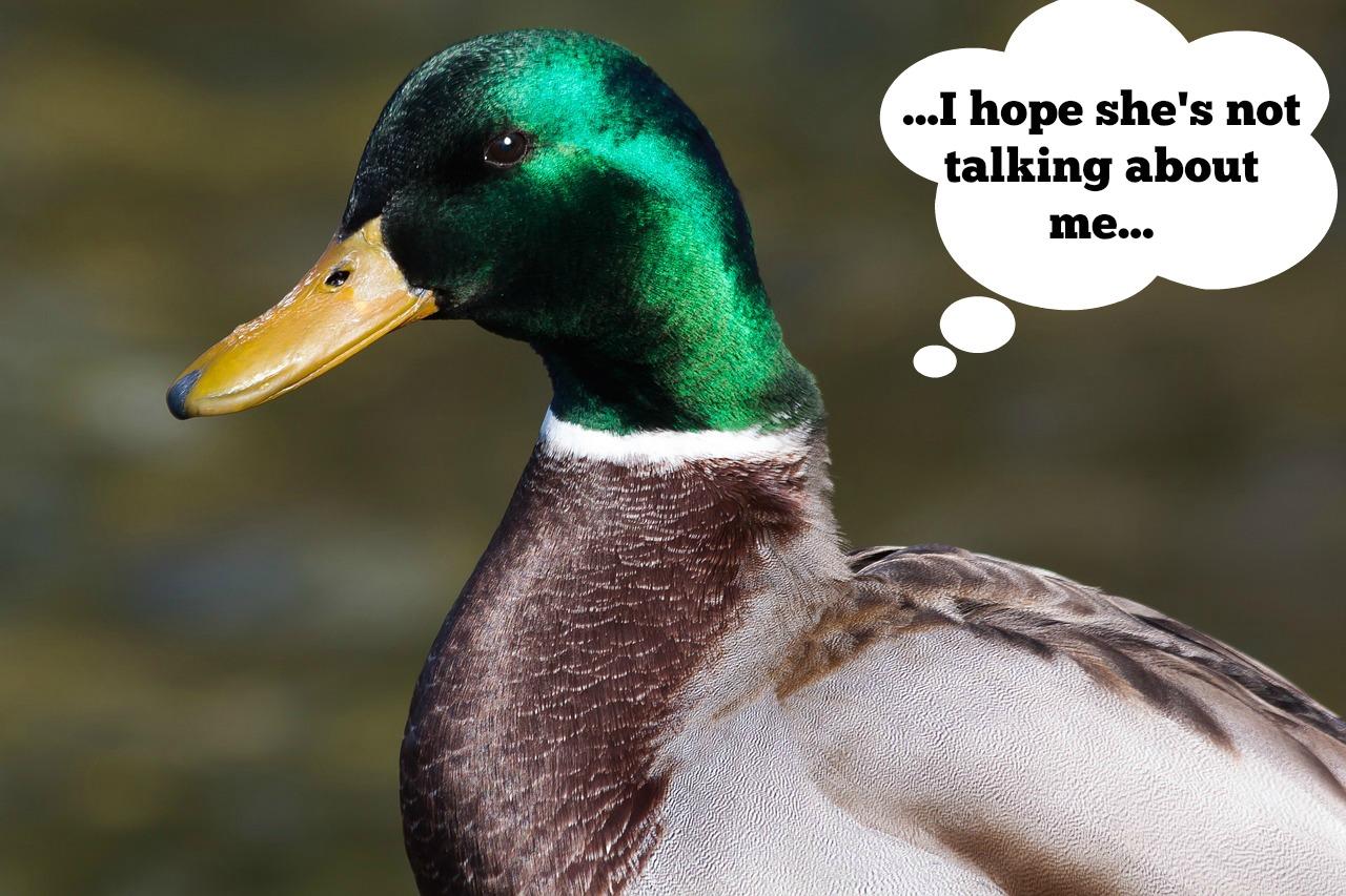Duck Suck 54