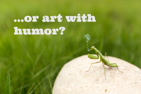 humor photo praying mantis